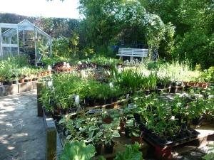 The Nursery in Spring