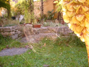 Beautiful Autumn cobwebs
