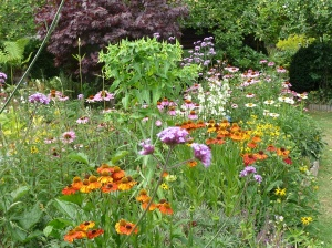 Echinacea, Helenium,Verbena,Rudbeckia..