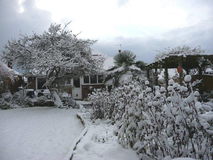 Our garden year (2/6)