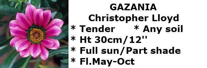 Gazania CL2
