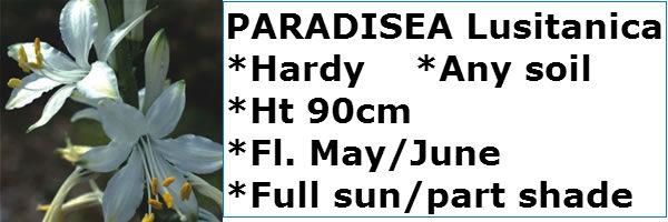 PARADISEA LUSITANICA2